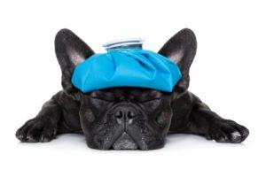 Sick Puppy - Whitehouse Dental